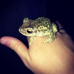 Washing-machine-frog being adorable.